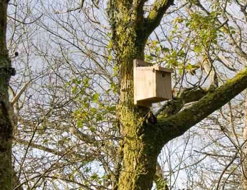 birdboxtree
