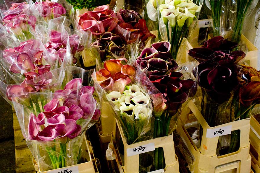 the woodland farm » Wholesale Flowers – is the 5am market worth it?